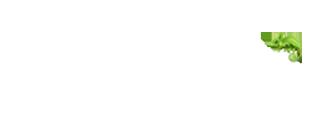 סיטי סיין Logo